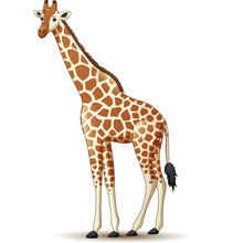 Cartoon Giraffe Isolated On White Background