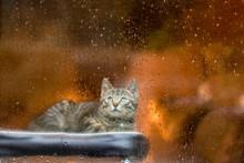 雨の日の猫