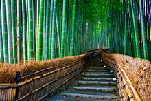 Bamboo Forest In Arashiyama Of...
