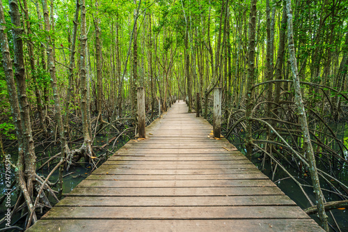 Garden Poster Road in forest wooden bridge in a mangrove forest at Tung Prong Thong, Rayong, Thailand