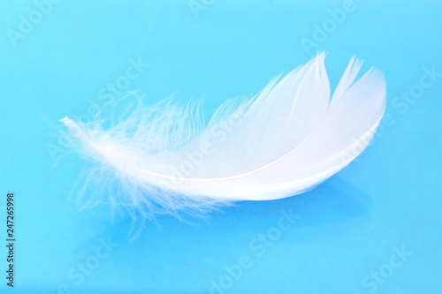Light soft white bird feather on blue background with reflection. Close up