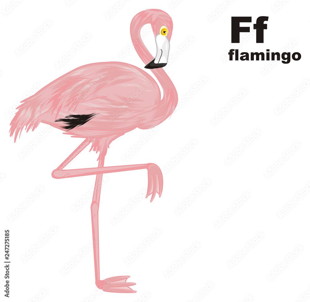 flamingo, pink flamingo, pink bird, bird, feathered, pink, animal, zoo, paradise, summer, abc