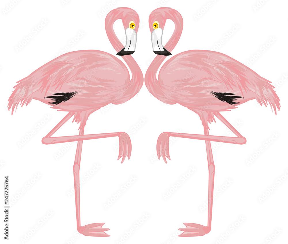 flamingo, pink flamingo, pink bird, bird, feathered, pink, animal, zoo, paradise, summer, two