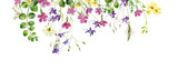 Fototapeta Kwiaty - Frame of wild flowers and herbs on a white background. For greetings and invitations