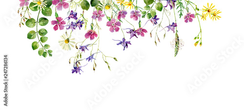 Fototapeta Frame of wild flowers and herbs on a white background