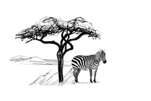 Zebra Near A Tree In Africa. H...