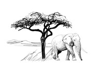 Elephant Near A Tree In Africa...