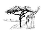 Giraffe Near A Tree In Africa....