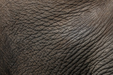 Leather, Skin Of The Asian Elephant.