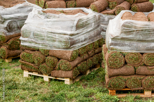 green lawn in a roll on pallets  city gardening - Buy this stock