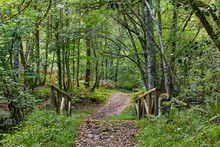 Wooden Path In The Forest. Mun...