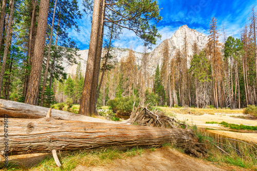 Deurstickers Verenigde Staten Yosemite Valley. Magnificent national American natural park - Yosemite.