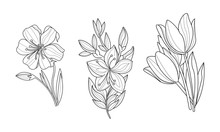 Vector Set Of 3 Sketchy Ornamental Flowers. Beautiful Blooming Plants. Botanical Theme. Hand Drawn Illustrations