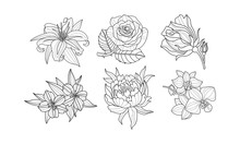 Vector Set Of Beautiful Hand Drawn Flowers. Monochrome Rose, Lily, Peony, Orchid And Hibiscus