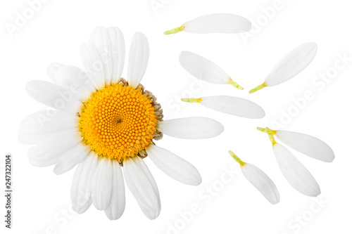 Foto op Canvas Madeliefjes chamomile isolated on white background, clipping path, full depth of field