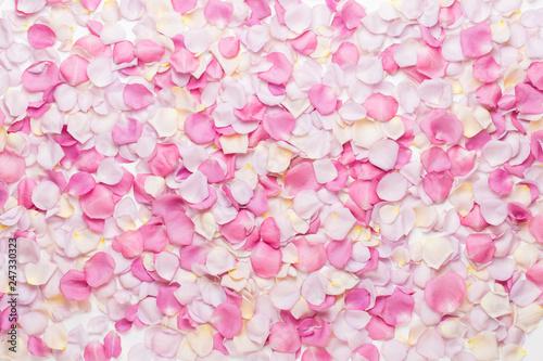 Fotografía  Pink rose flowers petals on white background