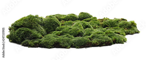 Obraz Green moss isolated on white background - fototapety do salonu