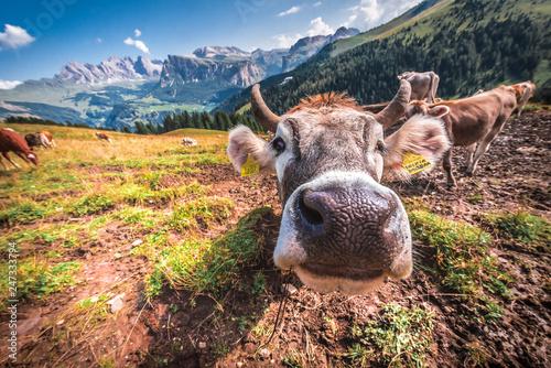 Fotografie, Obraz  Włochy, Italia, Dolomity, góry, droga chata, szałas piękne miejsca, relaks, odpo