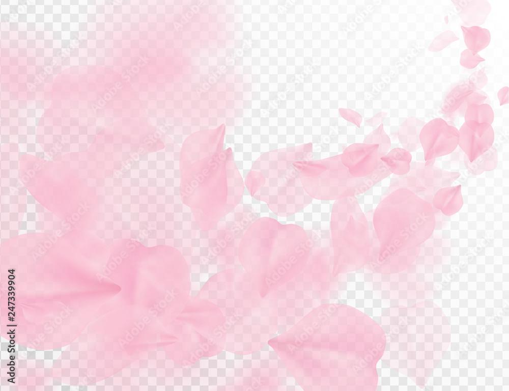Fototapeta Sakura petal flying vector background. Pink flower petals wave illustration isolated on transparent white. 3D romantic valentines day spring tender light backdrop. Overlay tenderness romance design.