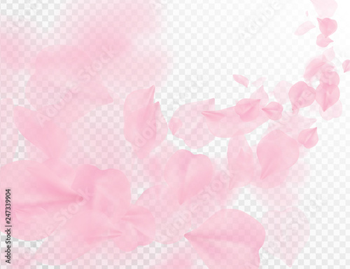 Sakura petal flying vector background. Pink flower petals wave illustration isolated on transparent white. 3D romantic valentines day spring tender light backdrop. Overlay tenderness romance design.