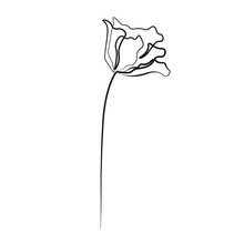 One Line Drawing Flower, Vector Illustration