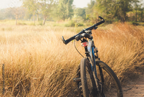 Garden Poster Bicycle bicycle and grass field sunset background