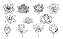 Collection Of Lotus Sketches. Lotuses, Buds And Leaves In Vintage Style.
