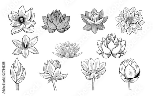 Photographie  Collection of lotus sketches