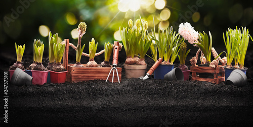 Papiers peints Jardin Gardening Tools and Plants. Spring Garden Works Concept