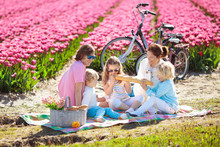 Family Picnic At Tulip Flower Field, Holland