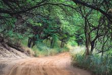 Dirt Road Through Lush Jungle Tree Tunnel