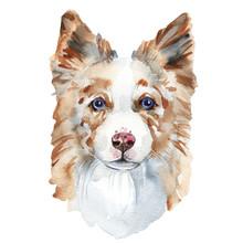 Watercolor Dog Portrait Of A B...
