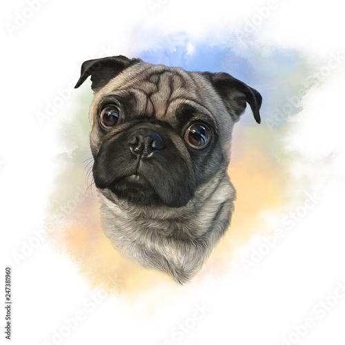 Cute Pug Dog On Watercolor Background Watercolor Animal Collection Dogs Dog Pug Portrait Hand Painted Illustration Of Pets Good For Banner T Shirt Card Buy This Stock Illustration And Explore Similar