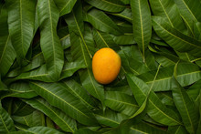 Ripe Yellow Mango On Tropical Green Leaf Background, Top View