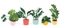 Potted Houseplants Collection Set Vector Illustration.