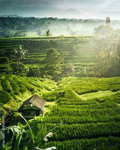 Garden Poster Rice fields A sunrise over rice terraces on Bali