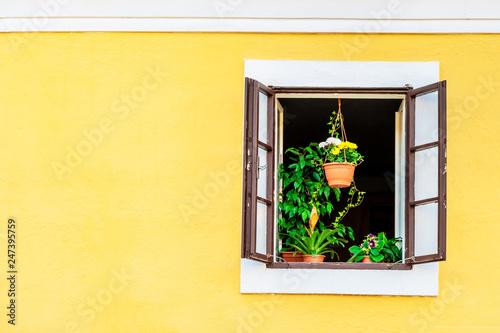 Zdjęcie XXL Zielone rośliny domu na parapecie okna otwarte na żółty żółty budynek