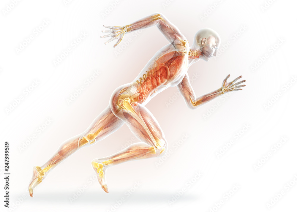 Fototapety, obrazy: Arthritic,joints (yellow), medically 3D illustration on white background