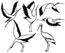 Wild Birds. Stork