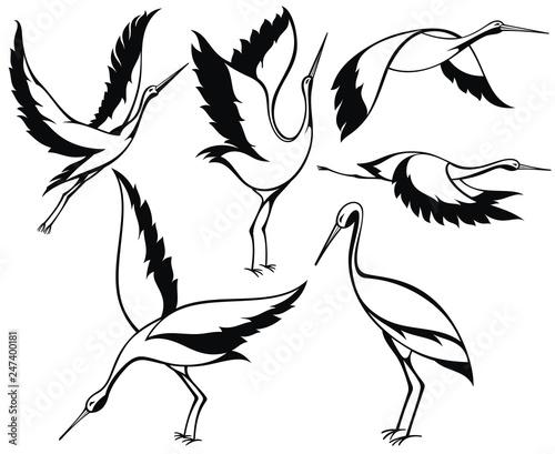 Fototapeta Wild birds. Stork