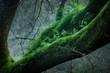 Winter Woodland moss