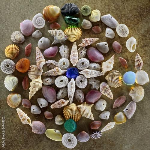 Fotomural Mandala di conchiglie