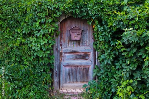 old door with mailbox in garden