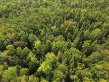 Aerial View Of Forest In Quebec