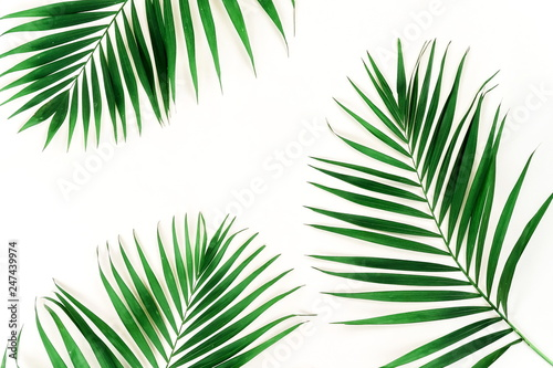 Keuken foto achterwand Bomen tropical green palm branches pattern frame on a white background. top view.copy space.abstract.