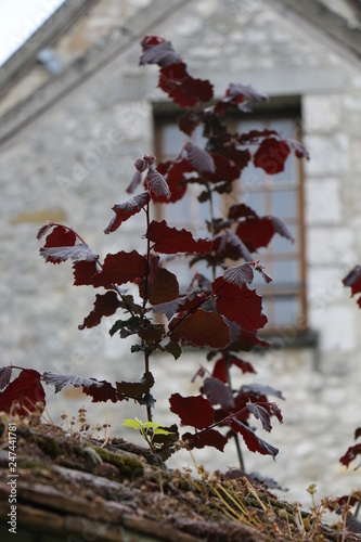 Fotografia  Twigs, plants on the background of a stone wall. Spring, France