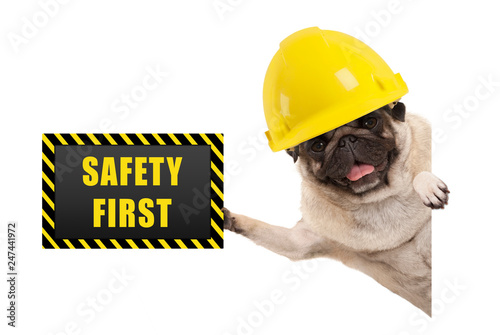 Fotografie, Tablou  frolic smiling pug puppy dog with yellow constructor helmet, holding up black an