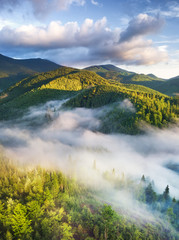 FototapetaAerial view at the forest in fog. Beautiful natural aerial landcape at the summer time. Forest and mountains.Top view from drone. Mountain-image