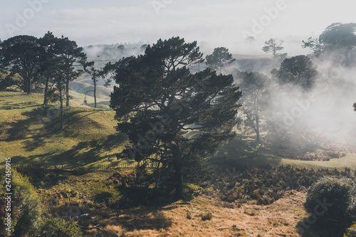 Fotografie, Obraz  foggy Pine Forest in Hobbiton, New Zealand