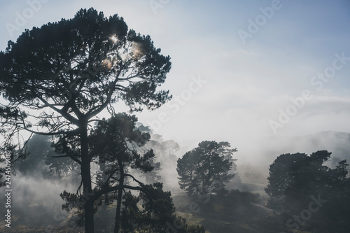 Fotomural foggy Pine Forest in Hobbiton, New Zealand